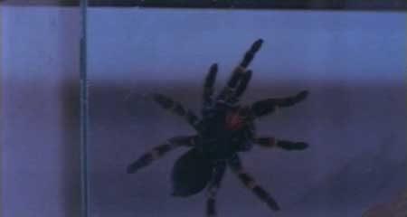 Evil-Spawn-1987-movie-Kenneth-J.-Hall-Ted-Newsom-(12)