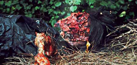 Hotel-Inferno-2013-Movie-Necrostorm-Extreme-5