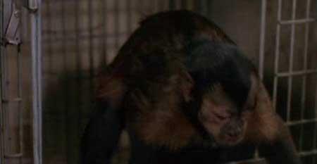 Monkey-Shines-1998-movie-George-A.-Romero-(8)