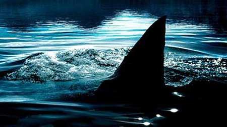 Shark-Lake-2015-movie-Jerry-Dugan-(3)