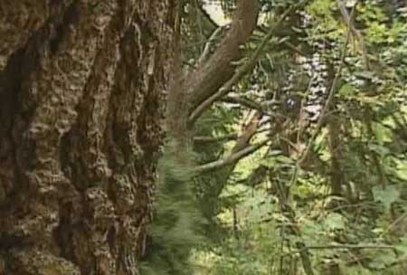Trees-2000-movie-Michael-Pleckaitis-(1)