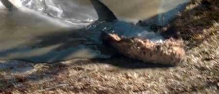 Sharkansas-Womens-Prison-Massacre-2016-movie--Jim-Wynorski-(4)