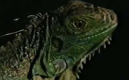 dont-go-to-sleep-1982-movie-richard-lang-3