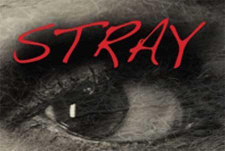 interview-nena-eskridge-stray-4