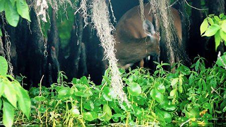 boggy-creek-monster-2016-movie-seth-breedlove-6