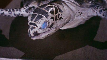hellgate-1989-movie-william-a-levey-1