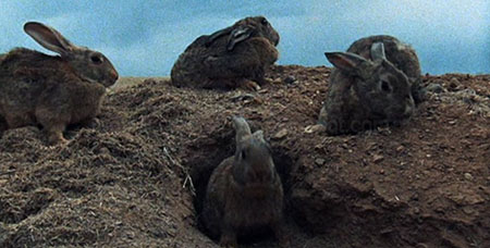 night_of_the_lepus-1972-movie-william-f-claxton-1